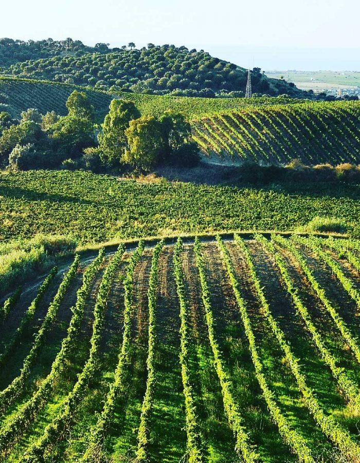 territorio-vitivinicolo-ducropio